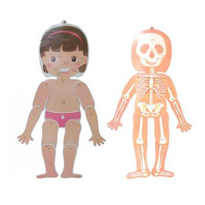 人體骨骼掛圖